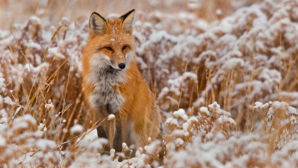 Охота на лису с манком, ХантЛЭНД