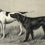 Ивашенцев А.П. Дрессировка и натаска охотничьих легавых собак