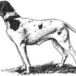 Оберлендер Г. Дрессировка и натаска охотничьих собак (поле, лес, водоем)
