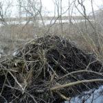 Хатки и плотины бобров