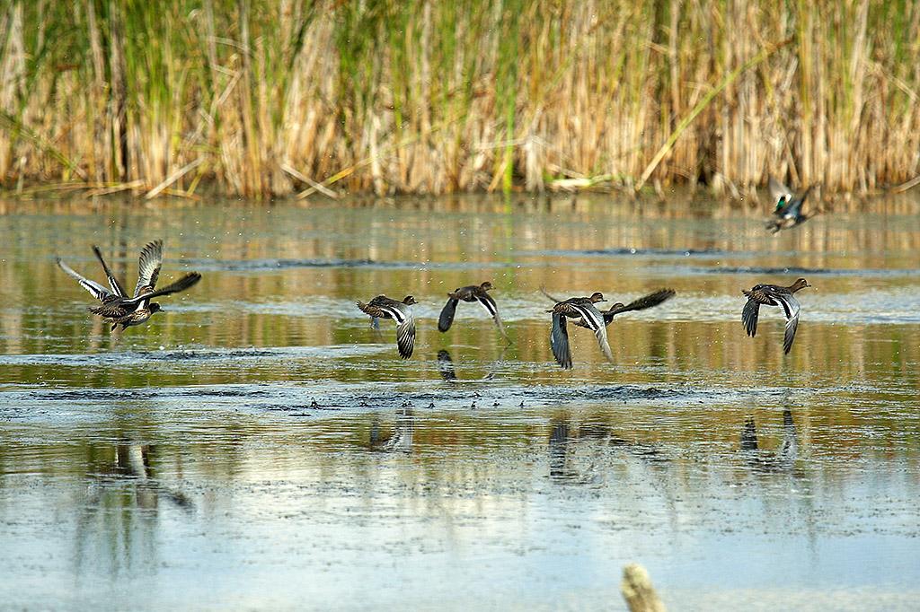 охота на уток