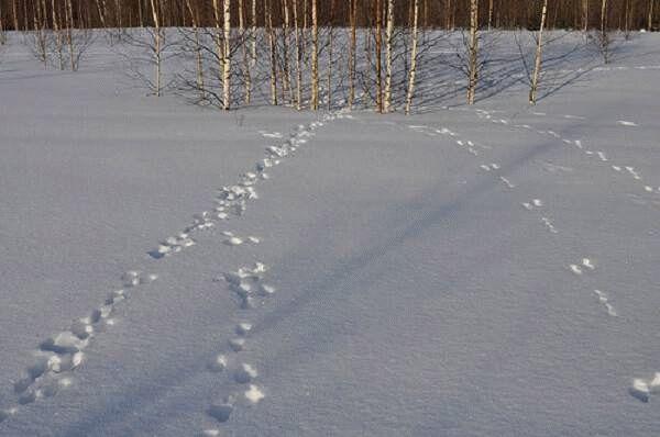 погиб мирное фото заячьих следов на снегу тяжело переживает развод